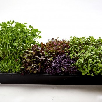 Mountain Man Micro Greens