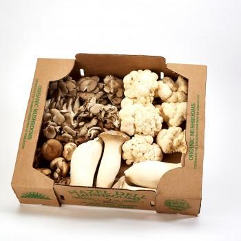 Hazel Dell Organic Mushrooms